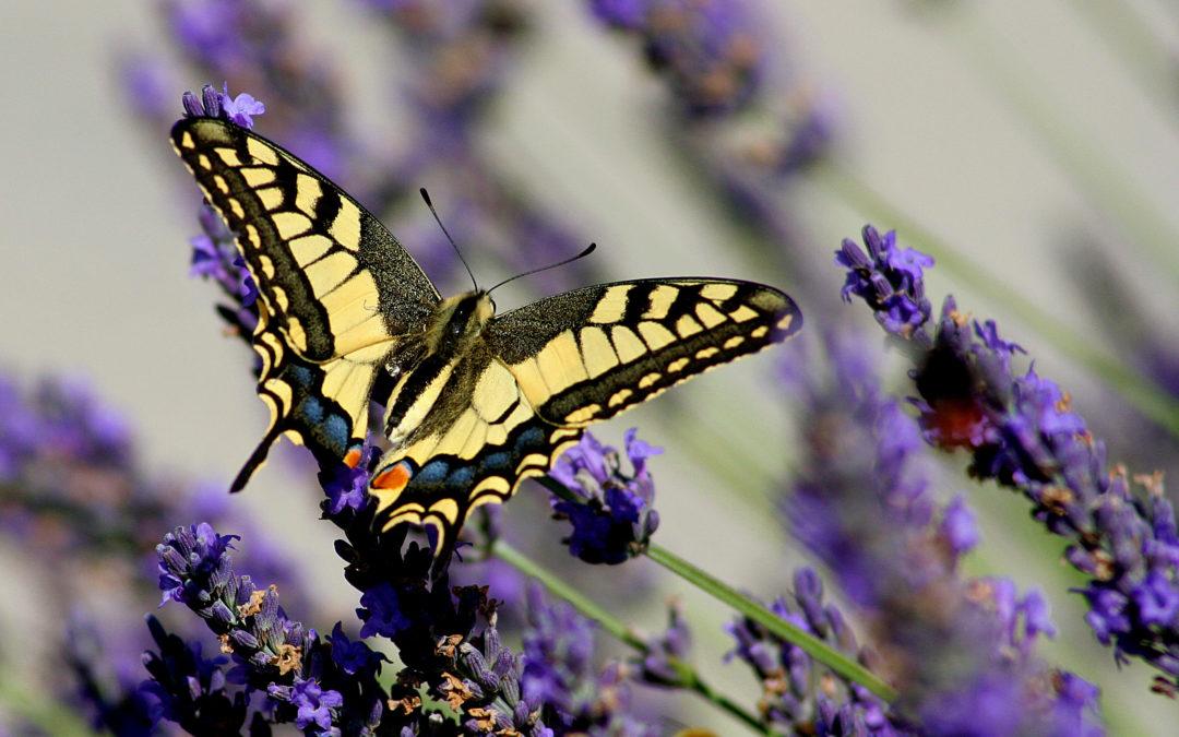 Favorisez la biodiversité dans votre jardin